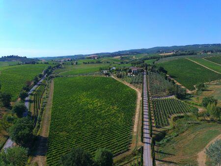 vineyard drone view
