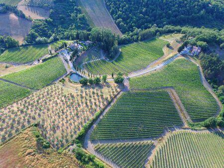 vineyard aereal view