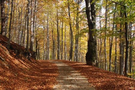 PiÄ™kny park jesieniÄ… z drzew