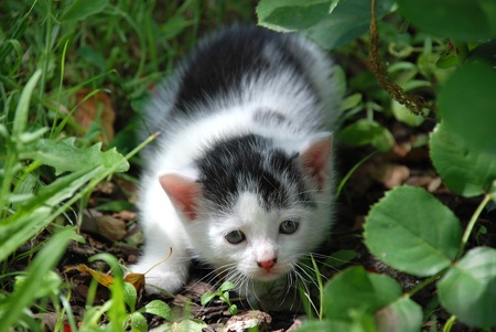Scared little kitten sitting in the grass