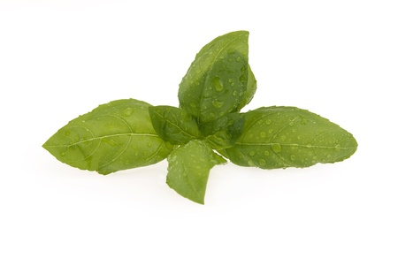 Fresh basil leaves on a white background Zdjęcie Seryjne - 9396744