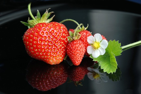 Fresh and tasty strawberries white flower on a black background Zdjęcie Seryjne