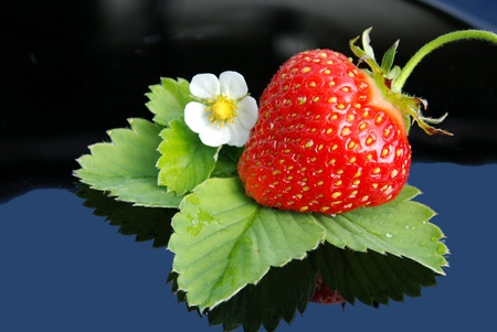 Fresh strawberry  and white flower on blue background Zdjęcie Seryjne