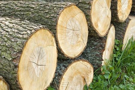W sekcji cykliczne drewna. Przewidzieć drewna opaÅ'owego. Zdjęcie Seryjne - 9664945