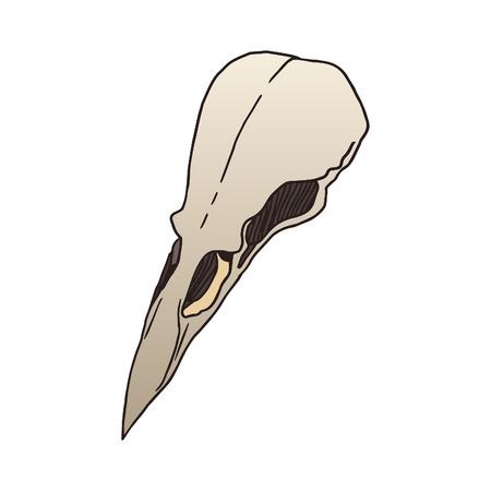 animal skull: Bird skull vector illustration