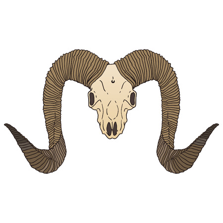 Ram skull isolated vector illustration. Vector