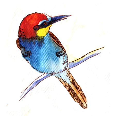 eater: Watercolor-style vector illustration of Bee Eater bird on white background.