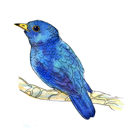Watercolor-style vector illustration of small blue bird on white background. Stock Illustratie