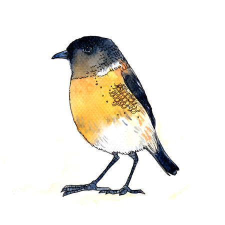 ornithology: Watercolor-style vector illustration of cute yellow bird on white background.