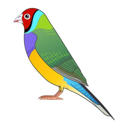 Beautiful tropical exotic Lady Gouldian Finch. Vector illustration.