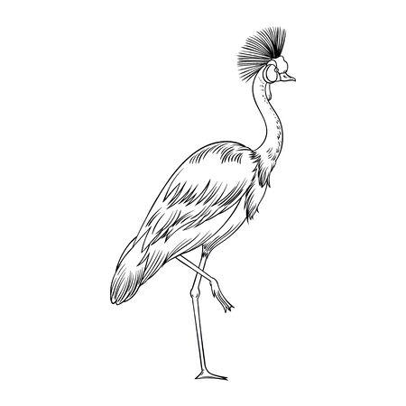Beautiful tropical exotic parrot bird. Vector illustration. 일러스트