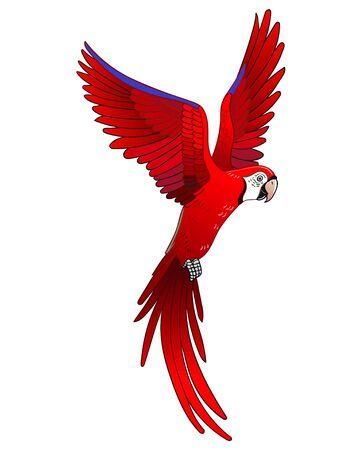 Bellissimo uccello pappagallo esotico tropicale. Illustrazione vettoriale.