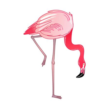 Beautiful tropical exotic parrot bird. Vector illustration.