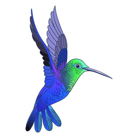Beautiful tropical exotic hummingbird bird. Vector illustration.