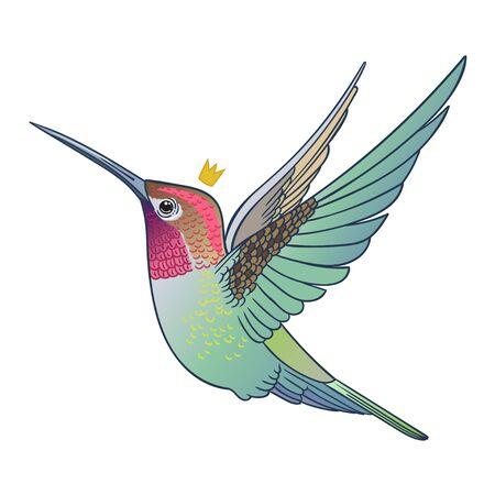 Beautiful tropical exotic hummingbird bird. Vector illustration.