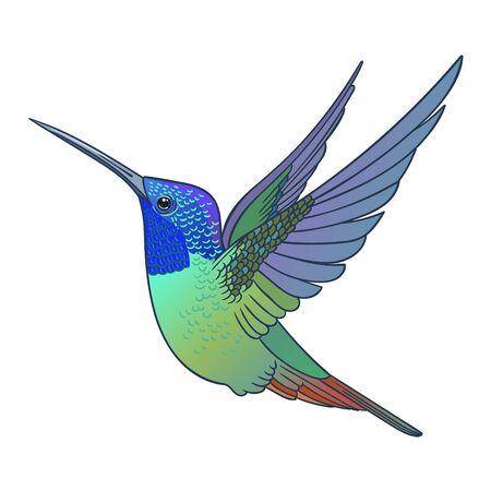 Mooie tropische exotische kolibrievogel. Vector illustratie.