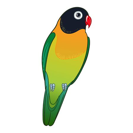Beautiful tropical exotic lovebird. Vector illustration.