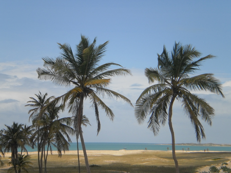 Punau Tropical Beach Rio Grande do Norte with palm trees in Natal northeast of Brazil. Stock Photo