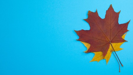 Yellow red leaves in autumn at blue background