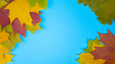 Yellow green red leaves in autumn at blue background Banco de Imagens