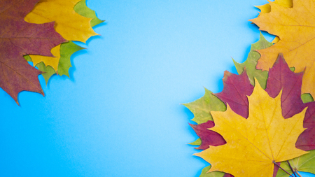 Yellow green red leaves at blue background in autumn Banco de Imagens