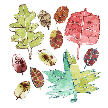 drawing paper: Set of Colorful Vector Watercolors Autumn Leaves. Isolated on White. Clipping paths included.