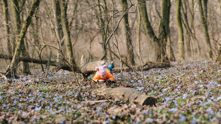 flourished: little girl learns nature. springtime. spring flowes. blossom. bloom. Stock Photo