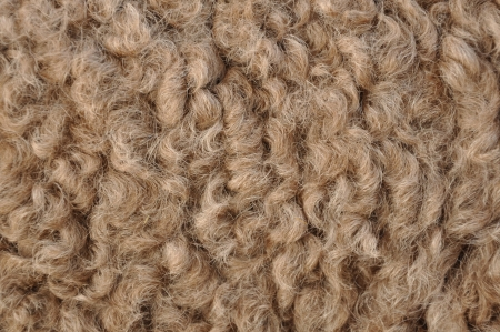 variously: Camel hair is, variously, the hair of a camel; a type of cloth made from camel hair; or a substitute for authentic camel hair; and is classified as a specialty hair fibre