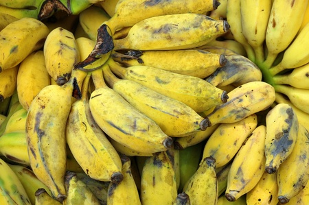 bruised: The banana plant is the largest herbaceous flowering plant
