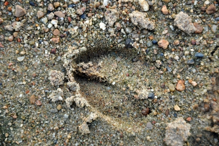 Footprints can be followed when tracking during a hunt or can provide evidence of activities   photo