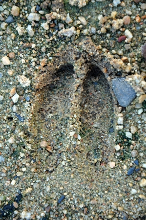 Footprints can be followed when tracking during a hunt or can provide evidence of activities   Stock Photo