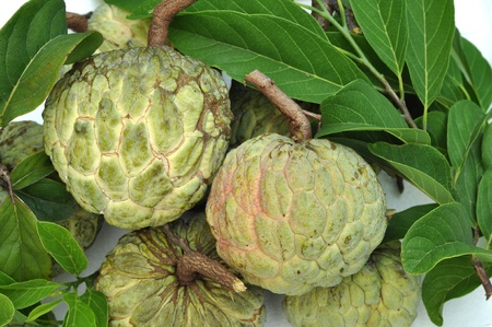 Sugar-apple fruit is high in calories and is a good source of iron photo