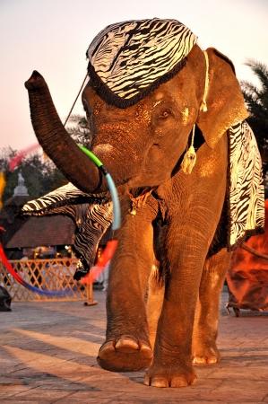 The intelligent elephants show in Chiang Mai Night Safari, thailand Stock Photo - 14419893