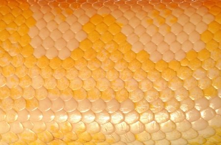 Snake skin, with its highly periodic cross-hatch or grid patterns photo