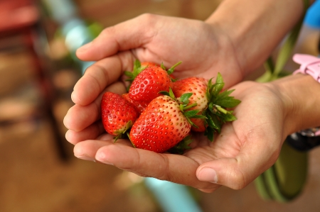 Strawberries are an easy plant to grow, and can be grown almost anywhere in the world   免版税图像