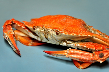 seafood background: fresh steamed crabs at Chumphon province, Thailand.
