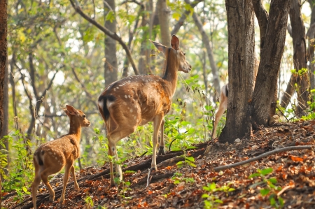 nara park: mother and baby Japanese deer are tricky at the morning  Stock Photo