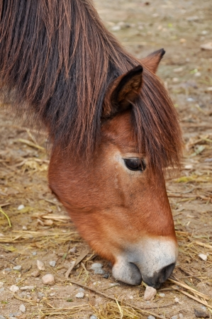 Ponies are generally considered intelligent and friendly, though sometimes they also are described as stubborn or cunning.