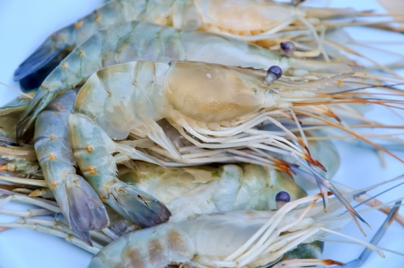 jumbo shrimp: fresh shrimp from the farm for cooking. Stock Photo