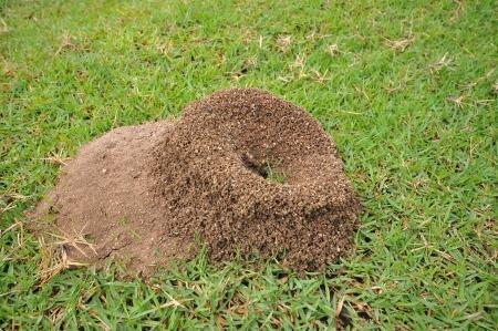 ants nest on greensward Stock Photo