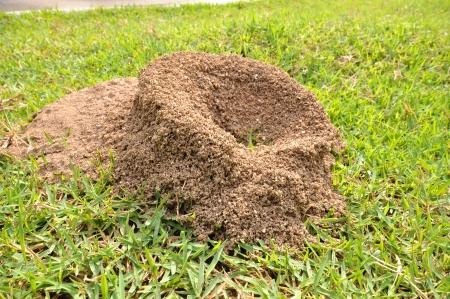 mounds: ants nest on greensward Stock Photo