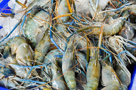Fresh Giant malaysian prawn are on sale in the bazaar. photo