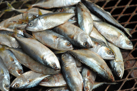 Mackerel fish used as food in Thailand is sold fresh Mackerel fish and steamed Mackerel fish. photo