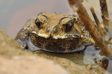 best known: Toads are best known for their thick, warty skins.