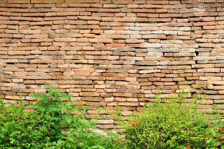 Old brick walls and bushes in front. photo