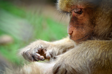 preen: Rhesus monkeys were preen for insects to clean the body.
