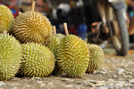Durian LONG-LIN LAPLAE small durian, but it is delicious. 免版税图像