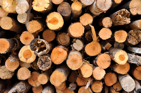 Firewood as a fuel source that is readily available.