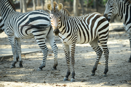 Zebra was watching when something is wrong.