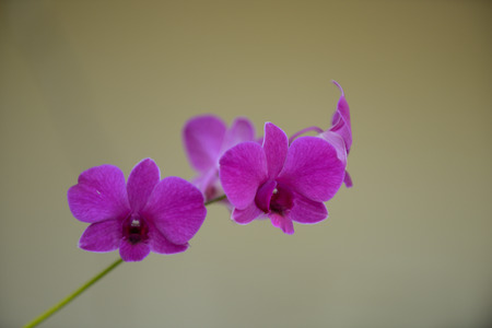 fragility: purple orchid on brown background